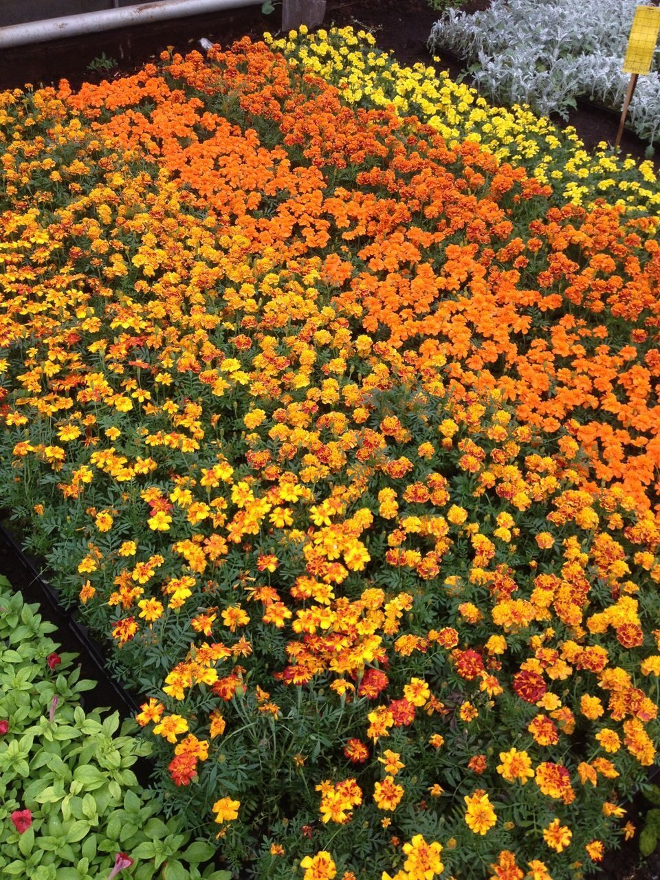 Чем оформить клумбу из цветов на даче своими руками фото